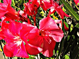 Neon Pink Tropical Flowers by my-dog-corky
