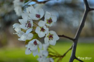 Blossoms 2 by AppareilPhotoGarcon