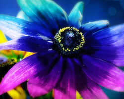 Beautiful Black Light Flower by MrAngryDog
