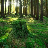 green treestump by indojo