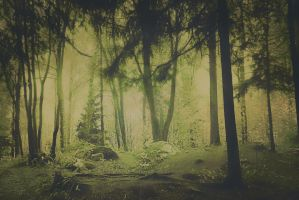 forest 9 by Amalus