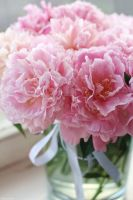 Peonies by LilyBrilliant