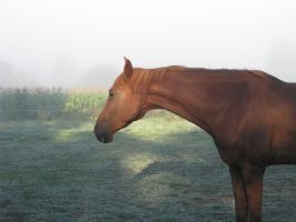 Golden head on a foggy morning by Asbeventer