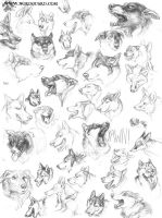 Dog Head Studies by screwbald