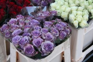 roses at market in Aachen by ingeline-art