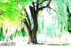 Tree in colour by ANTHONY1314