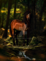 Forest by feverpaint