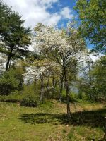 Spring Trees by GUDRUN355
