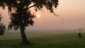 Sunrise meadow with tree 3 by SelvaStock