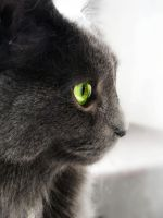 Green Eyed Grey. by LordMcWhiskers