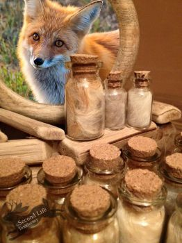 Red fox fur-bottle FOR SALE *Ethically sourced* by SecondLifeTaxidermy