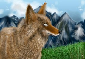 Coyote-Colored by neecolette