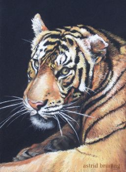 Watching You - Pastel Painting by AstridBruning