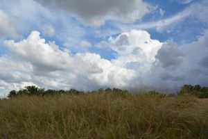 Cloud n dry grass by SaiyanPowerful