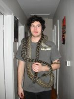 Baz with awer carpet pythons by CrazyViper