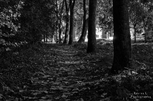 The Path by DiY171