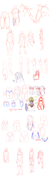 Anatomy notes sketch dump by IzzydaBomb