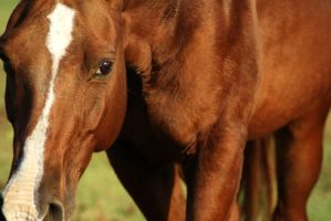 Copper: Up Close by Canlyn88