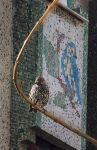 Bird on bough Bird on wall by kavsikuzah