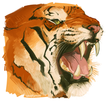 Tiger Study Again by HaxPunch