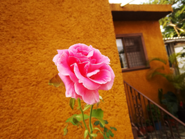 Mexico by Silphes