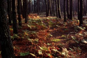 forest in the morning_2 by czochanska