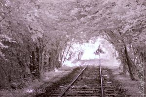 Train to infrared... by jeje62