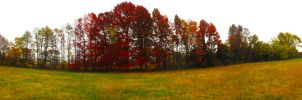 Autumn Treeline 03 by GlenRoberson