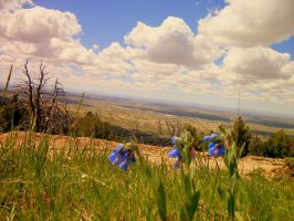 Blue Bells View by zombiose