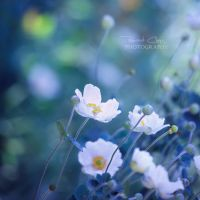 .:Blue Innocence:. by RHCheng