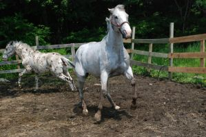 Appaloosa 57 by Spotstock