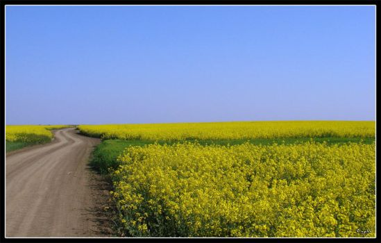 The yellow road by tybcorp