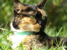 Cleo the Calico by Jedi-With-Wings