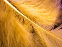 Yellow Feather by Rainbow826