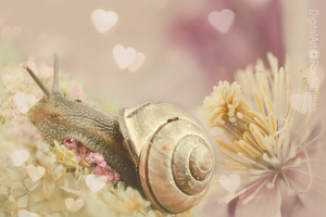 The Snail by ROSASINMAS