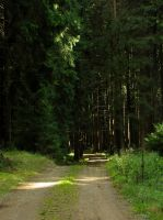 Summer Forest Background by Andenne