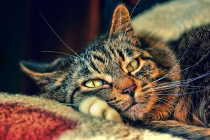 my cat by LordBurevestnik