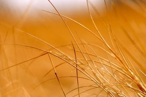 fescue by contemporaryhart
