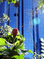 Flower in the City by Labrug