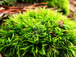 Shaggy Moss II by AmanitaKnight