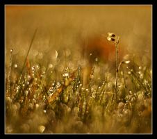 Morning dew by Alexandra35