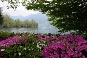 Lake with Flowers by addybetto