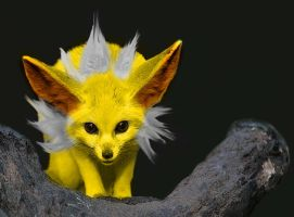 Real Jolteon by Ayane-Sabakuno