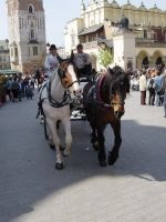 Horses In Cracow by Austriia
