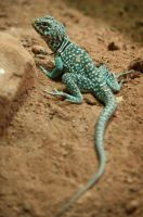 Reptile Stock 01 by Malleni-Stock