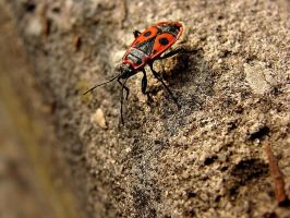insect. by Casiula