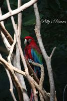 Macaw by Amb08