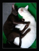 Yin-Yang Cats by MiEsJ