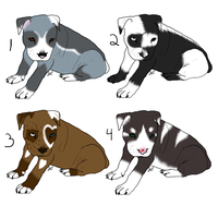 10point pitbull puppies CLOSED by BrokenWingAdopts