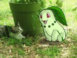 Chikorita Meeting My Cat by DoodleScout
